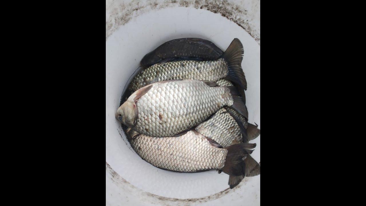 Супер рыболовная насадка--ЖЁЛТАЯ БОМБА--Бешеный клев- карася.карпа.леща.плотву.