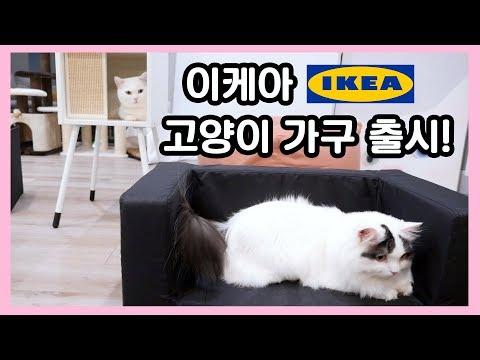 이케아 고양이 가구 출시! 쵸꼬비의 체험