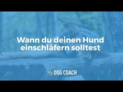 Wann Du Deinen Hund Einschläfern Solltest!   My DogCoach