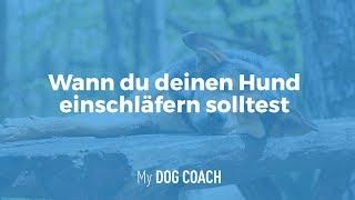 Wann du deinen Hund einschläfern solltest! | My DogCoach