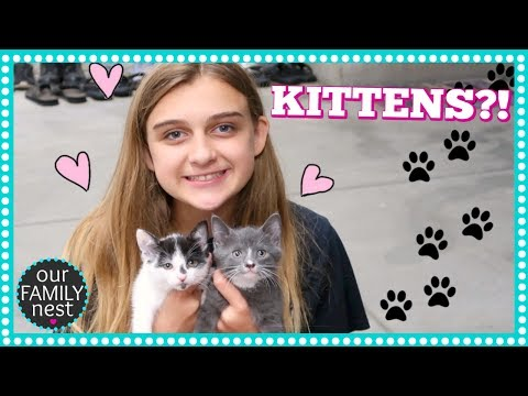 NEW BABY KITTENS!! DOES KARLI'S DREAM FINALLY COME TRUE?!