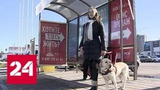"""""""В клетку"""": в Краснодаре не пустили в автобус девушку с собакой-поводырем - Россия 24"""