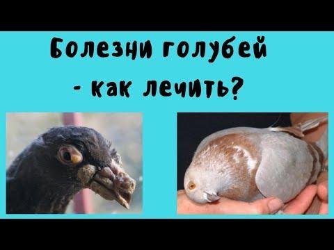 Чем болеют голуби