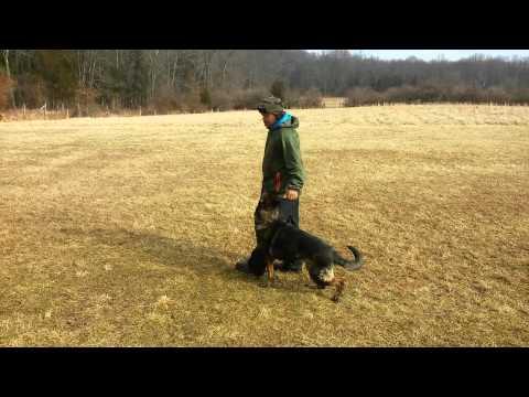dog-obedience-training-schutzhund-ipo