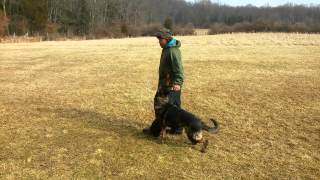 Dog Obedience Training Schutzhund Ipo