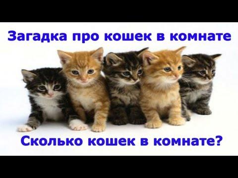 Загадки та завдання з котиком Мявчиком. Розвиваючий мультик для дітей