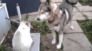 Кошки против собак 3 скоро
