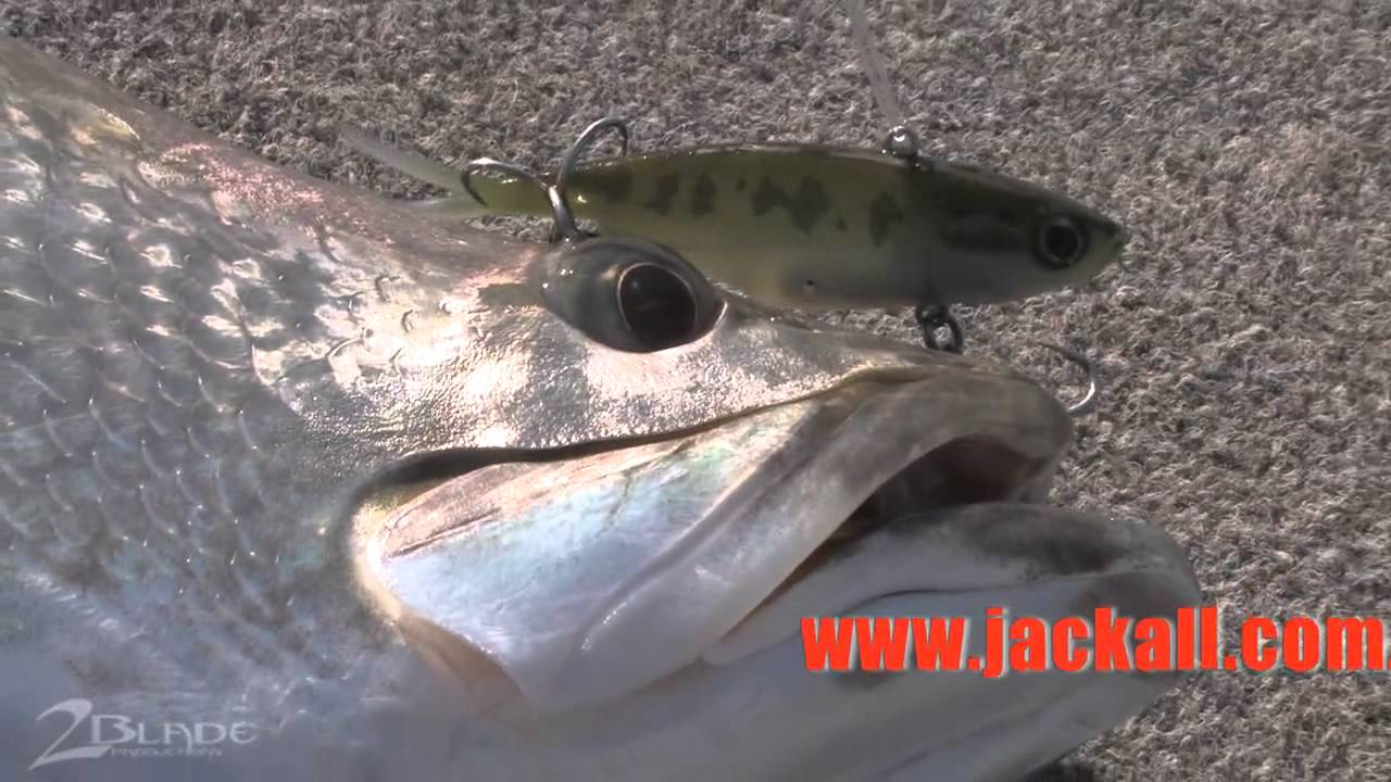 how to catch barramundi on lures