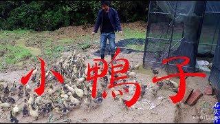 農村小伙進山種草餵魚,在山腳看到了什麼?一路猛追800米【石頭秀】