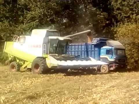 Claas Lexion 450 Corn Harvest Kastanies Evrou 17.10.2017 No 2