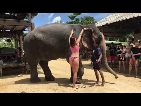 Girl on elephant .Very Intresting Very Enjoyble