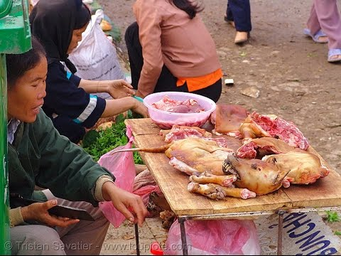 Dog Meat, Fake Eggs, Synthetic Cabbage, Plastic Rice. The Chinese are killing us.#WatchWatYouEat Pt3