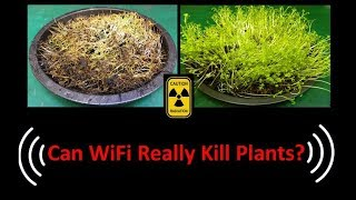 Can WiFi Really Kill Plants