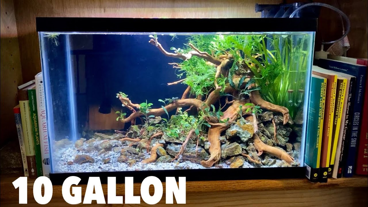 Download Aquascaping A 10 Gallon Budget Planted Tank