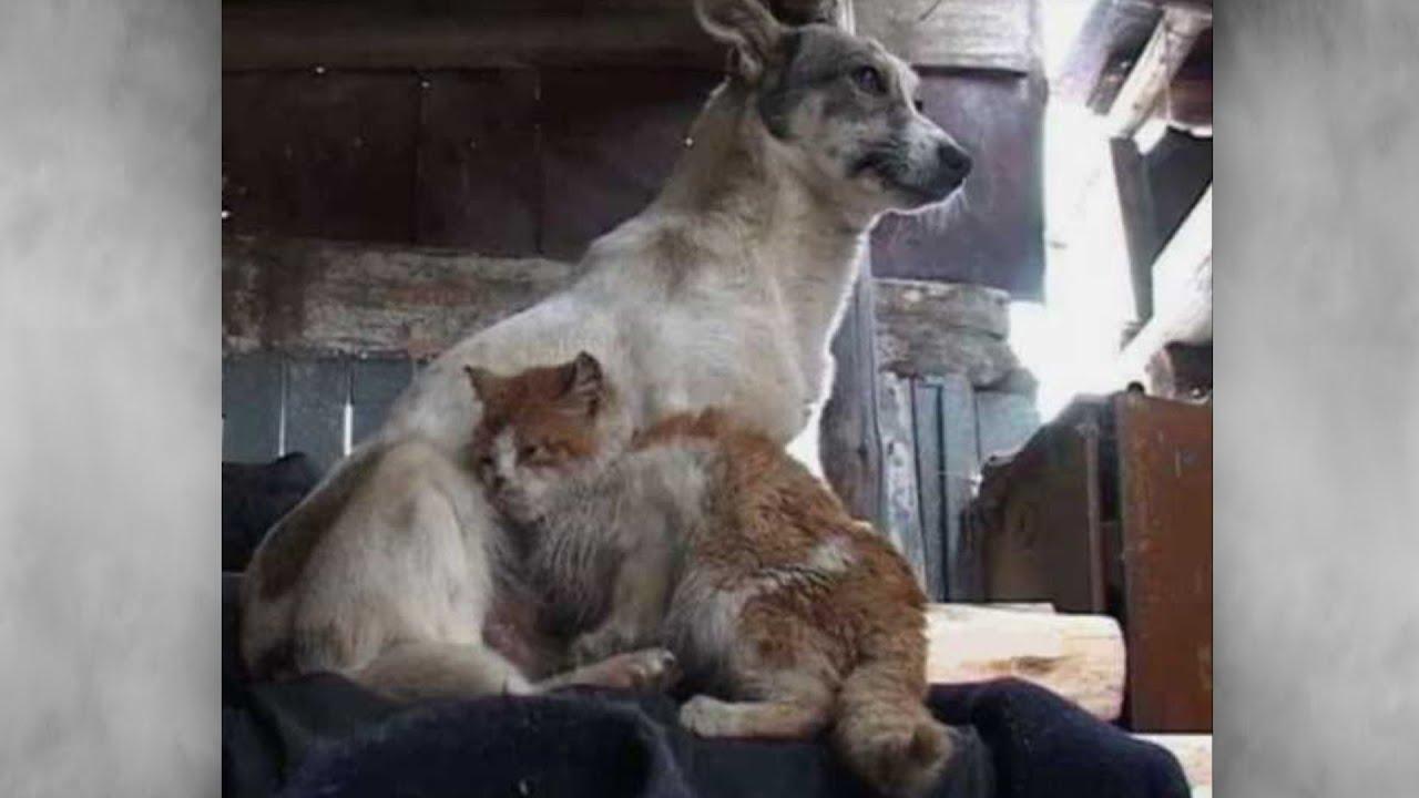 Собака с кошкой три года выживали в заброшенном коровнике ...