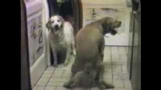 Funny animals. do it on objects and another animals. FUNNY