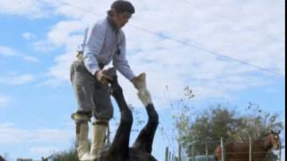 Horsing around! Argentine Gaucho cowboy performs some amazingly controlled yoga