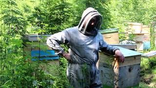 Пчеловодство : что это такое и с чего начинать?