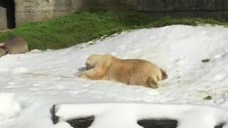 Polar Bear Snow Day