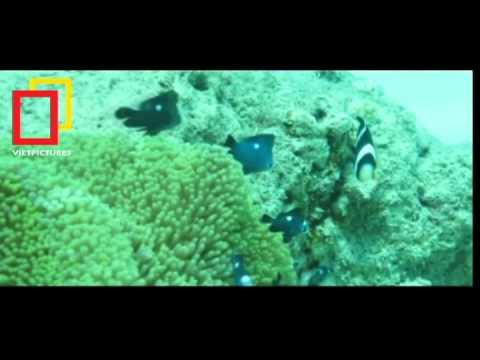 BĐKH 2012 Hệ sinh thái