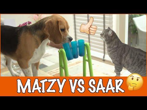Intelligentiespel met Matzy en Saar | DierenpraatTV