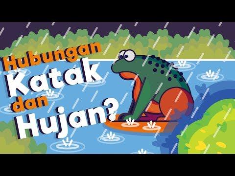 Bunyi Katak Di Saat Hujan Apa Penyebabnya ? #18