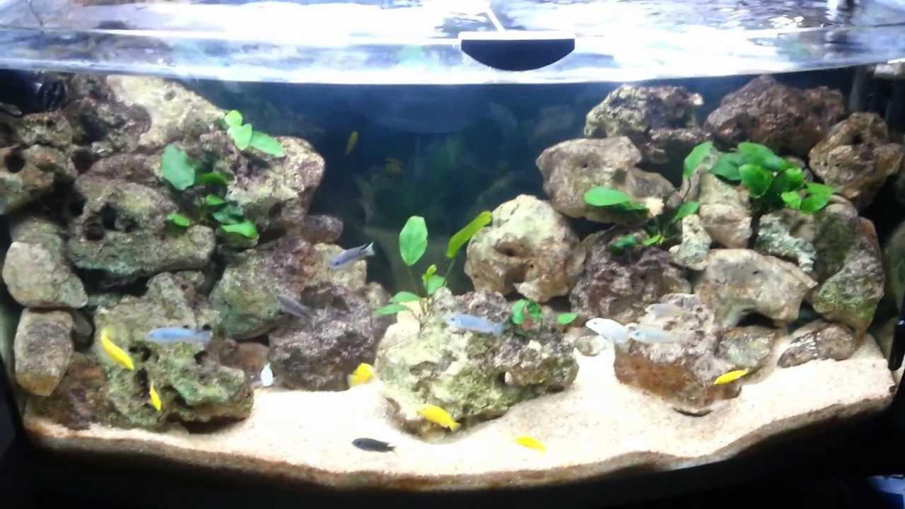 Aquarium 300litres malawi ouvert youtube for Aquarium ouvert