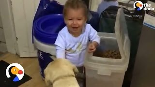 Toddler Feeds His Dogs One By One | The Dodo