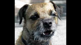 God Made A Border Terrier