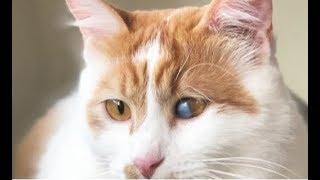 Дом — это всё, о чем мечтал слепой на один глаз котёнок! Но ждать счастья ему пришлось долго