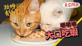 ►拉姆有幾噗◄ 貓咪吃蝦 療癒的貓咪吃播 ASMR ♧