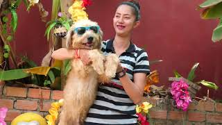 Amazing Beautiful Girl Playing With Dog Smart & Funny Dog# 10