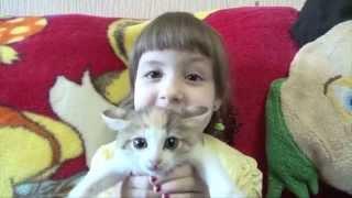 Танцующий Кот (Цветные сны Кота ХАмильона)