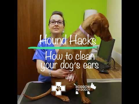 How to Clean Your Dogs Ears