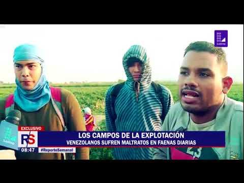 Reporte Semanal: los campos de la explotación en Casma