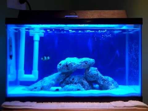 10 gallon saltwater aquarium start up pt 2 youtube for Starting a saltwater fish tank