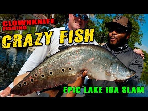 EPIC LAKE IDA SLAM!!! Catching Clownknife fish, Largemouth, Peacock Bass