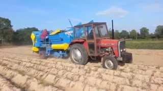 Kopanie ziemniaków 2015 |MF 255| & |NH t6050 plus|