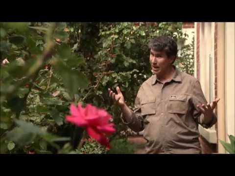 How To Prune Your Roses