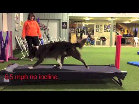 Treadmill Study of Stride