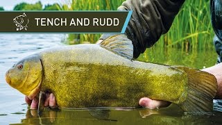 How To Catch Tench And Rudd UK Coarse Fishing