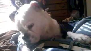 Puppy Watches Stomach Growl