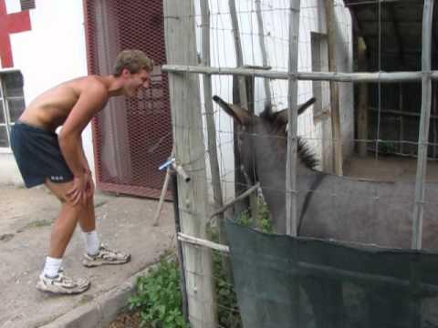 Man vs Donkey thumbnail