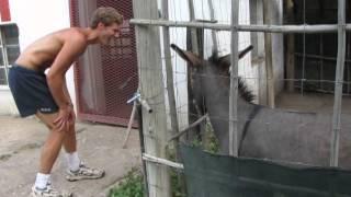 Man vs Donkey