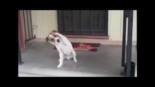 Умная собака. Smart dog