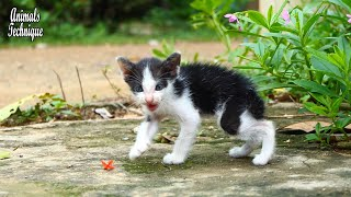 Very cute poor street kitten is running and crying meow meow to find her mother _ Stray animals life