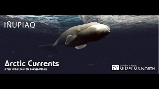 Arctic Currents: A Year in the Life of the Bowhead Whale (Inupiaq)