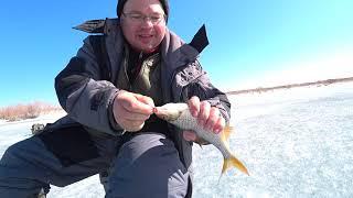 Весенняя рыбалка перед запретом 9 насосная Павлодар