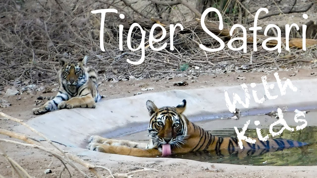 Ranthambore Safari - Indian Tiger Safari with kids