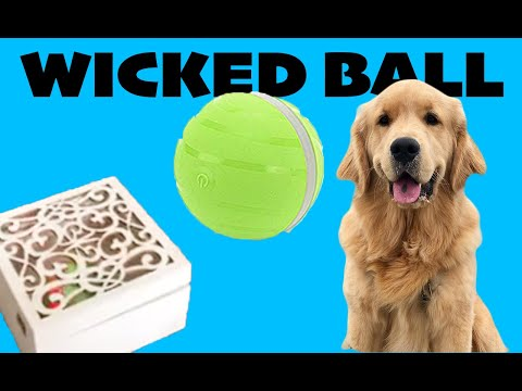 Dog Plays With Wicked Ball